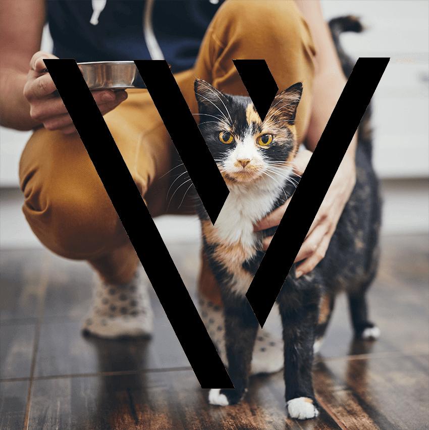 home-directory-bg-cat