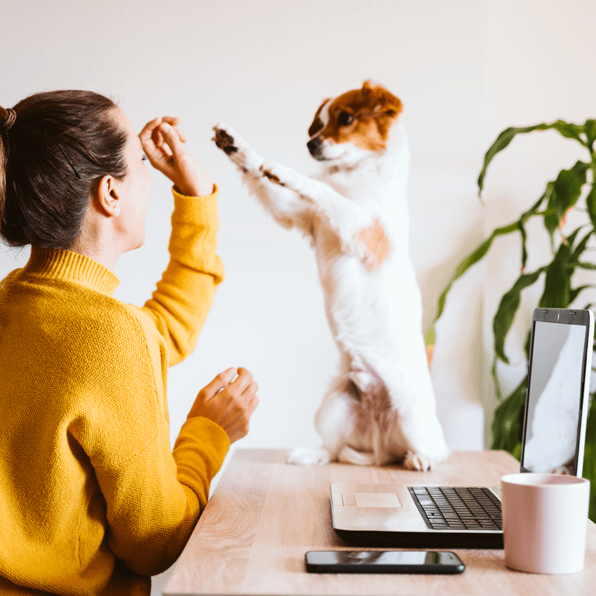 woman-with-dog-and-laptop-technical-support